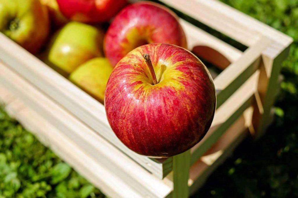 pakovanje poljoprivredna industrija